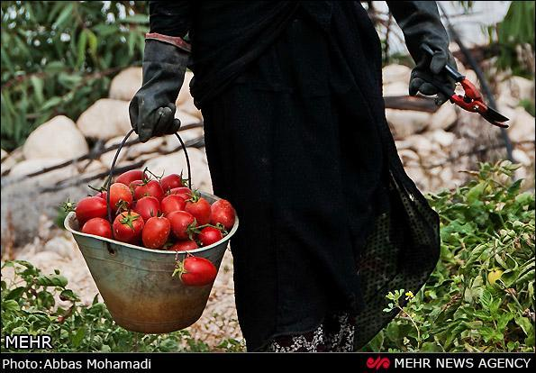 قیمت انواع میوه و تره بار در تهران، امروز 27 مهر 99