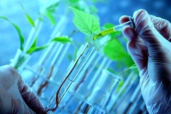 تامین امنیت غذایی با بیوتکنولوژی سبز