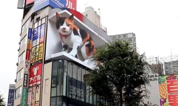(ویدئو) گربه سه بعدی غول پیکر روی بیلبورد